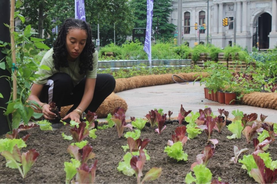 A photo of Crystal gardening at Thomas Paine Plaza in Downtown Philadelphia